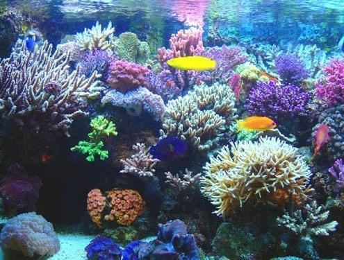 Corales, Cayo Largo