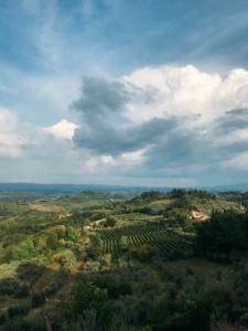 Vid, San geminiano, Toscana, Italia