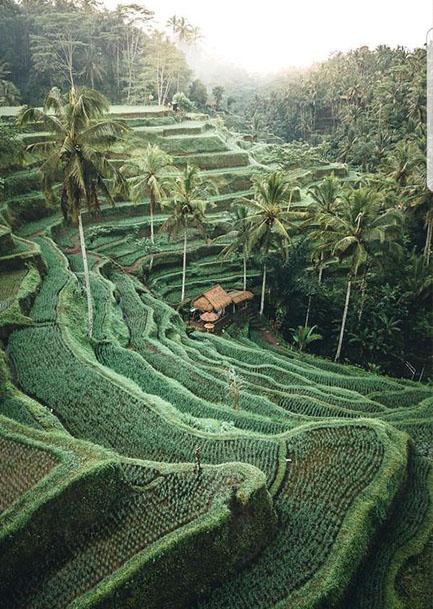 Fotos bali  terrazas de arroz